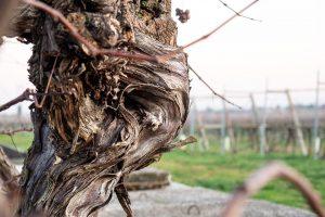 le foto di Barbara Venturi realizzate per il concorso Vino e Fotografia