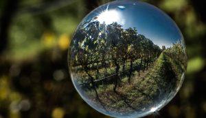 le foto di Loris Moratti realizzate per il concorso Vino e Fotografia