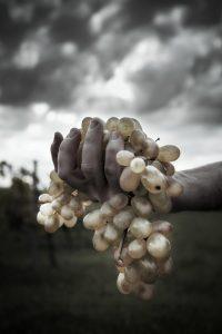 le foto di Nicola Rossignoli realizzate per il concorso Vino e Fotografia