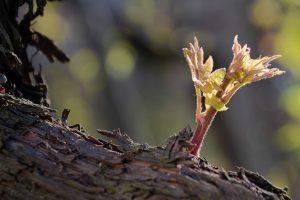 le foto di Silvia Nicoli realizzate per il concorso Vino e Fotografia