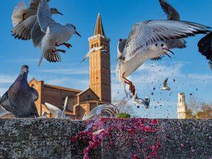 le foto di Vincenzo Bonanno realizzate per il concorso Vino e Fotografia